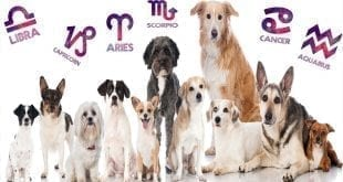 Animals and the Zodiac: Choosing Your Pet