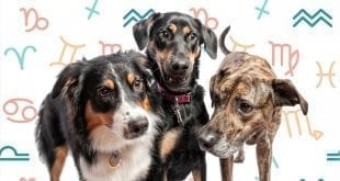 Dog Astrology from A to Z