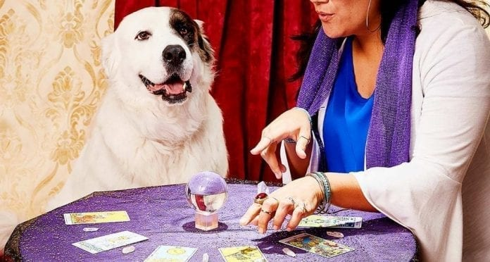 Why Consult PsychicOz for a Pet Reading?