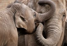 What is the Spiritual Significance of Elephants?